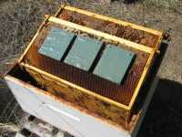 Mitegone application instructions, Treating varroa mites with formic acid organically, organic formic acid honey bee treatment